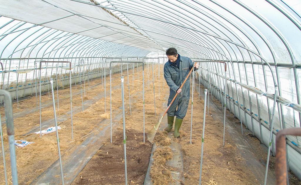 日置農園のアスパラハウスの様子