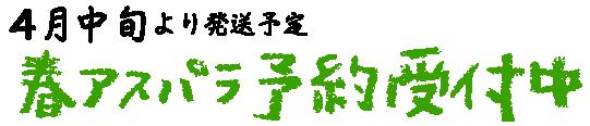 4月中旬より発送予定【春アスパラ予約受付中】