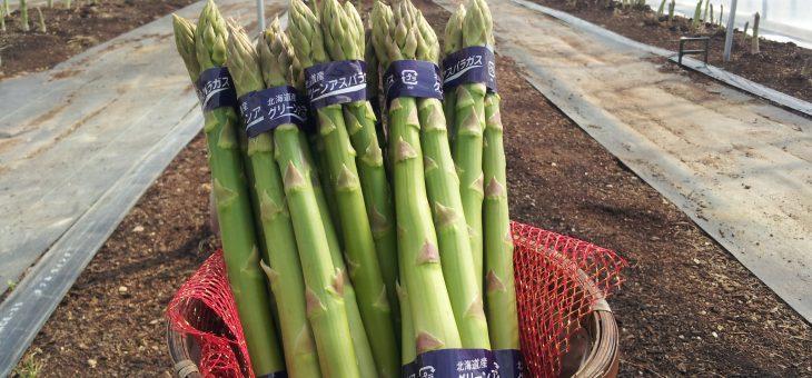 令和3年度、春芽アスパラガス 予約受付 開始のお知らせ。